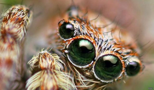 Los Animales Más Pequeños Y Sorprendentes Del Mundo