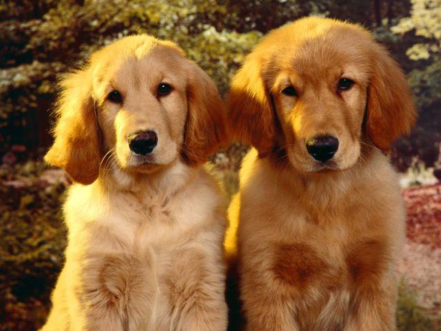 El ataque de los clones, en perro