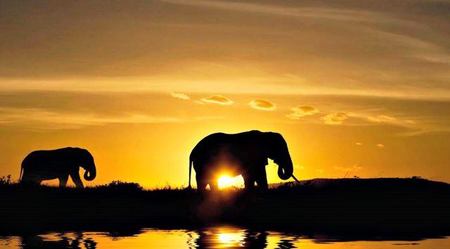 Abren santuario de elefantes jubilados en Brasil