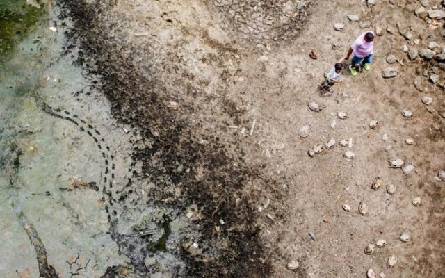 Extraño cementerio de tortugas en Brasil