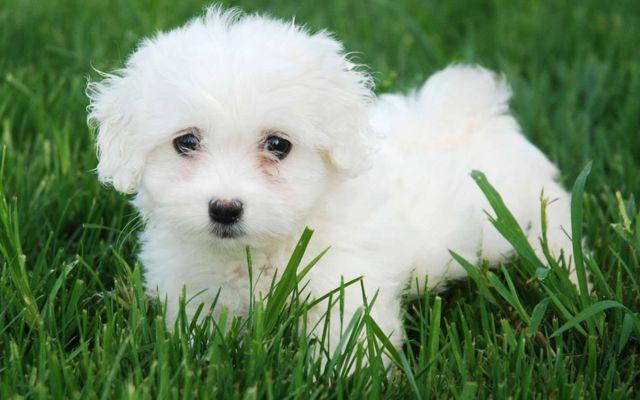 Lanzan una línea de casas de lujo para perros