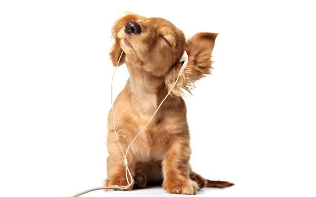 La música favorita de los perros es…