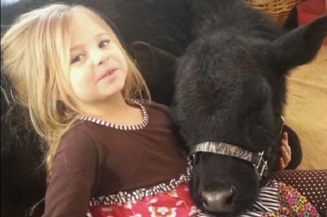 Niña mete una vaca a su casa mientras su mamá no estaba