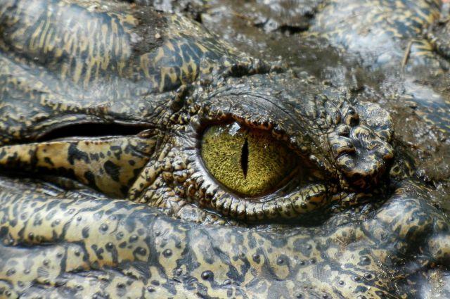 Pastor intenta caminar sobre las aguas y es devorado por cocodrilos