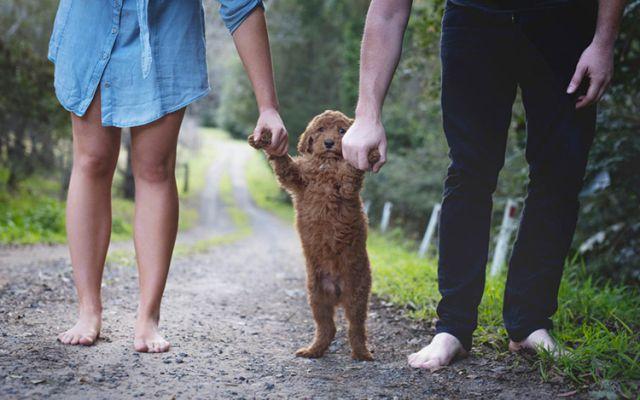 El nuevo modelo de familia en México está compuesto por perros