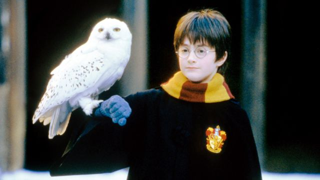 Culpan a saga de Harry Potter por la extinción de una especie de búhos