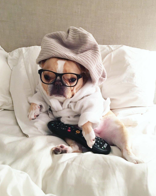 Los perritos de Instagram más adorables que deberías seguir