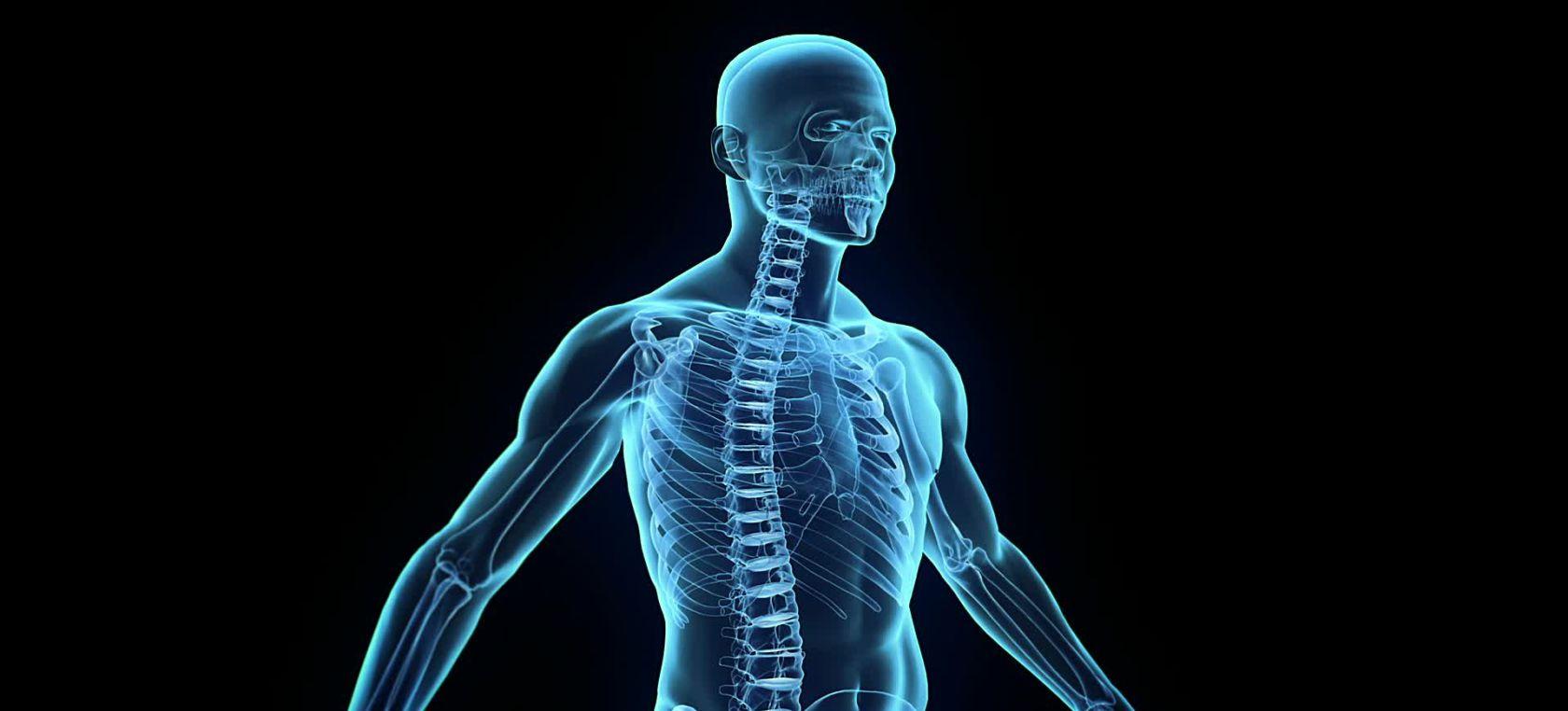 Cuerpo Humano: 10 Órganos que no necesitas para vivir | Actualidad ...