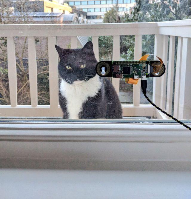 gato entra a su casa con reconocimiento facial