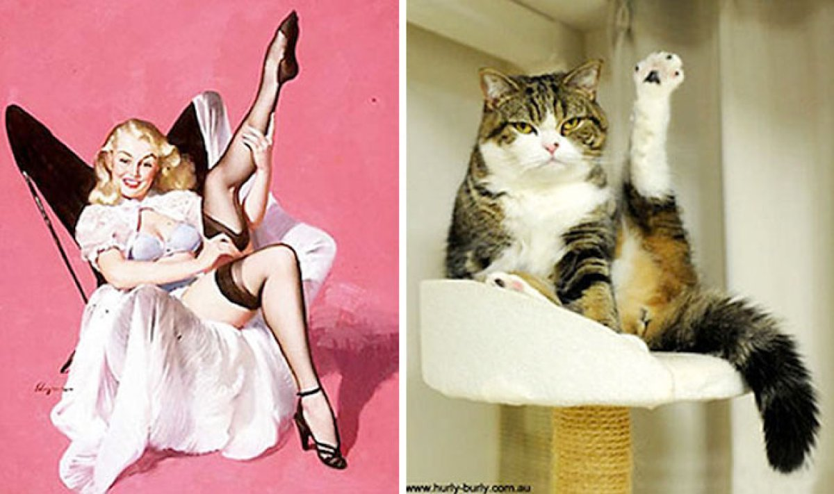 Estos gatos posando como chicas pin-up