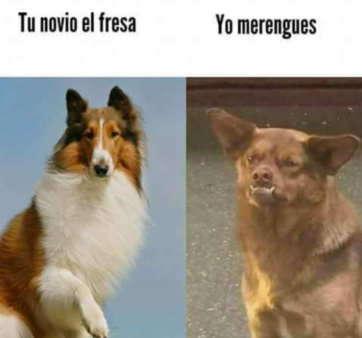 Resultado de imagen para memes famosos de animales