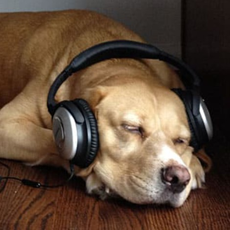 Spotify lanza podcast exclusivo para perros