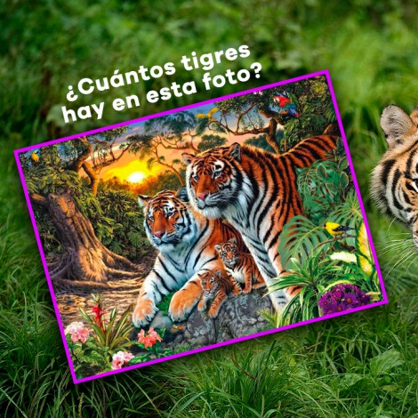 Reto visual: ¿Cuántos tigres ves?