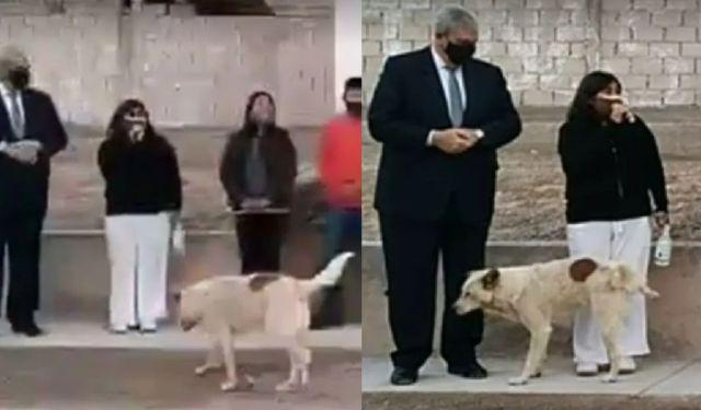 Viral: Perro orina a presidenta municipal en evento público | Actualidad | LOS40 México